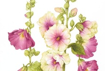 Botanical Illustrations / I have studied both Botanical Illustration and am a Watercolor painter, and love to see the work of others.