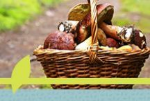 Mushrooms / Display of tasty mushrooms, recipes, and their beauty!  / by Blessed Herbs