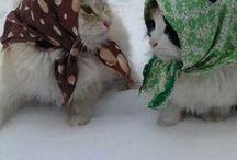 katten / weetjes over katten