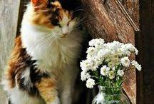 kat genieten