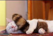 kat in gekke situaties / katten in vreemde plekken
