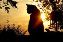 kat, gewoon kats / dieren in leuke situaties zoals ze reageren