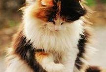 kat, gewoon lief / katten lieverdjes