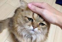 kat gekke gezichten / face