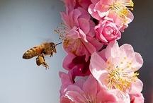living beauty / heavenly creatures - animals