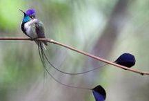 / birds / / by restless bird ╰ ❤ ╮