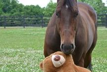 Horses / Horses Horses and more horses for anyone who is horse crazy