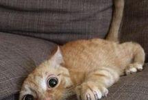 Котики/Cats / Котики