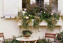 ΖΑΡΝΤΙΝΙΕΡΕΣ σε ΠΑΡΑΘΥΡΑ / Window flower boxes