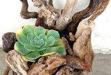 ΠΑΧΥΦΥΤΑ / Succulents