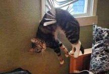 Katties en zo