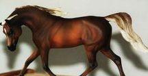 Eberl Trotting Arabian Stallion