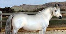 Eberl Welsh Pony