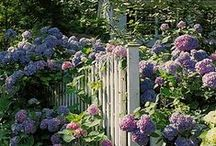 Garden dreams / Enchanting garden ideas and dreaming of the perfect garden