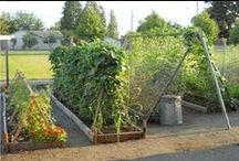 New Roots -you- Urban Farmers / we help you grow your own food