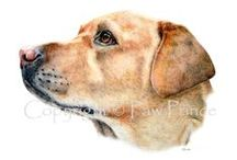 Art - Dogs I have painted / Some of the doggy portraits I have been commissioned to paint.