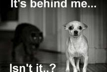 Best of Animal Memes