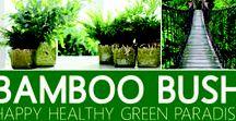 Bamboo Bush!
