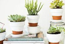 Pot & Planters