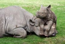 Save the Rhinos / by Rhino Internet