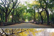 Central Park ❤ / Favorite spots