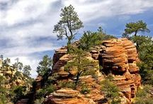 Zion National Park / A nice 45-50 minute drive from Best Western Coral Hills / by Best Western Coral Hills