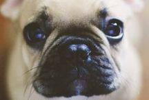 Хочу собаку / Want a dog