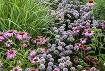 Beautiful plant combinations / Beautiful combinations of garden plants.