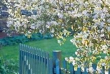 Garden and outdoors / by Robin Matlock