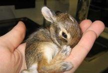 Awwwe / Sweet little creatures / by Tammy McGhee