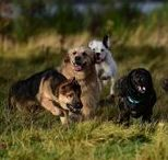 Photos of pets I care for / Photos of pets I care for when I'm dog walking or pet sitting in Renfrewshire.