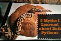 Ball Python Stuff