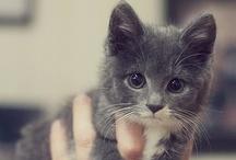 Cute ^_^