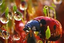 Ladybug / The symbol for luck and love...  and in the Netherlands tegen Zinloos geweld!