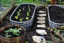GARDEN: Grow Herbs / Herb Gardens