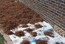 GARDEN: Composting