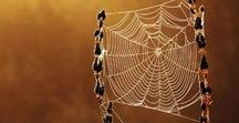 Web / In a world of 'spiders' you can still see the beauty. Love it ♥