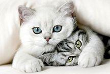 Katter / JUST • CATS