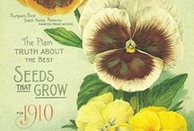 Seed Packets, Catalogs and Labels / by Lena Arsenault