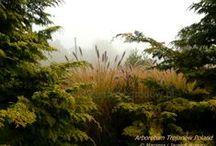 Ornamental grasses Trawy ozdobne / Kolekcja traw ozdobnych w barwnych zestawieniach z bylinami.Przykłady kompozycji kolorystycznych. Co 2 najdalej 3 lata sadzone są w innych układach kolorystycznych , a nadwyżki jako gotowe zestawienia aranżacyjne przeznaczone do sprzedaży. Sadzonki traw dostępne będą od marca. Również  wysyłkowo.