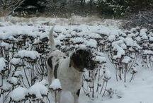 Winter Snow Arboretum Trojanów 2014 January