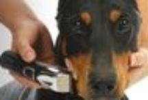 Tondeuses pour animaux, lames de rechanges, accessoires et informations. / Tout ce dont vous avez besoin pour les soins de vos animaux...