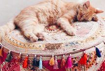 Cat | pictures