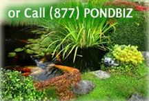 Tips for Creating Ponds / Articles that will help you with creating and runnign a pond.