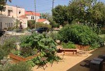 Gardens / Edible landscaping
