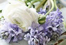Flowers!!!! love them all!!! ♥ / by Corrien Dünar
