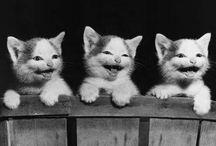 Cat and kitten 3