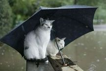 Animals Cats: Clip Art/Photos / Cats, kittens and felines.