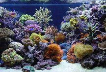 Cool aquarium stuff
