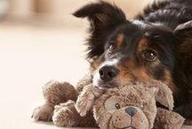 Für unsere tierischen Freunde ♥ / Haustiere sind die besten Freunde des Menschen. Mehr dazu: http://tchi.bo/Tierbedarf.
